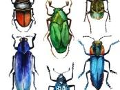 An Entomologist's Dilemma by Margaret Erhart