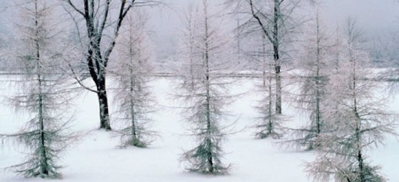 On Wintry Spirituality And Napping Martin Marty