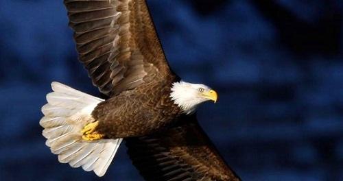 Eagle Poem Joy Harjo