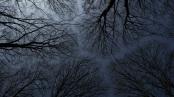 THE DARK NIGHT: Blinding The Soul