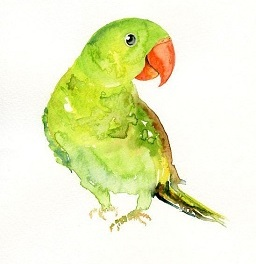 REFLECTION: Green Parrot In A Snowstorm