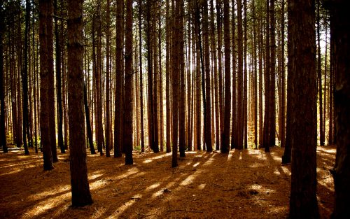 The Brown Forest by Robinson Jeffers