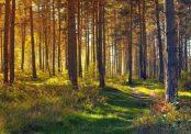 Impromptu Novena In September by William Wenthe
