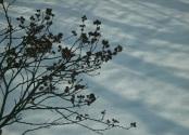 snowfall sarah arthur