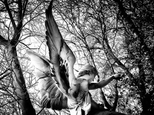 About Angels And About Tree Mary Oliver
