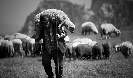 A Rant About The Job Description Of Shepherds by Allen Martin Bair