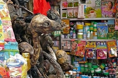 La Paz Witches' Market, Bolivia—Trusting In God Alone by Albert Holtz
