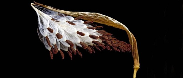 EVIL: Seeds