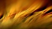 Wind by Trevor Hudson