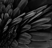 Morphometry by Helen Macdonald