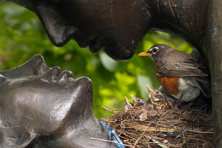 NATURE: Birds That Are New Yorkers by Donald Culross Peattie