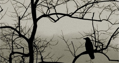 Black Rook In Rainy Weather by Sylvia Plath