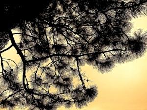 Advent Day 7 Personal Reflection by Enuma Okoro