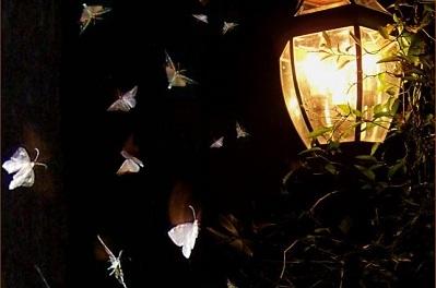 Seeking The True Light by Francine Rivers